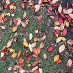すっかり秋から冬